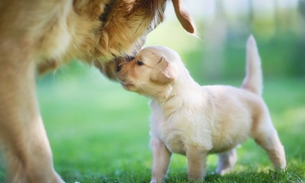Maternal Instincts and Pets