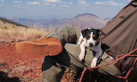 5 Reasons To Take A Road Trip With Your Dog
