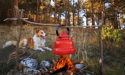 Dog Camping: Gear & Tips