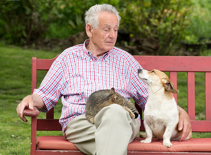 Best Companion Pets For the Elderly