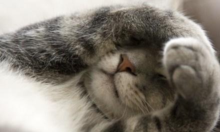 Cat Flatulence: Causes & Remedies