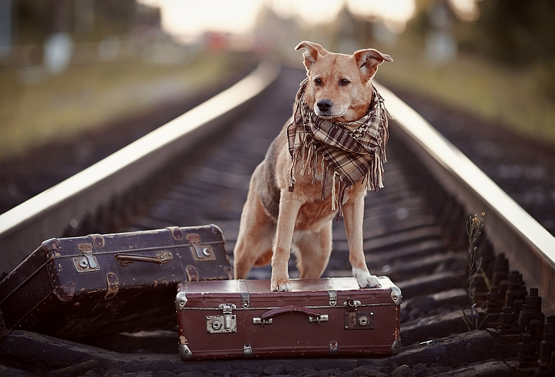 Top 7 Dog Friendly Vacation Destinations