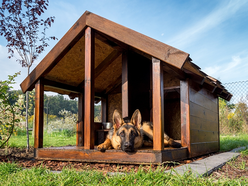 Picking the Right Dog House