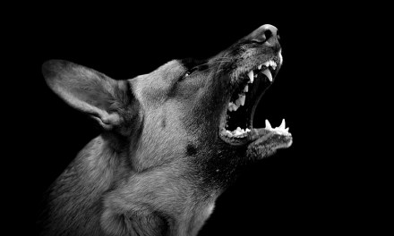 Aggression Triggers in Dogs