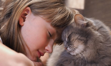 How Owning a Cat Can Improve Your Health