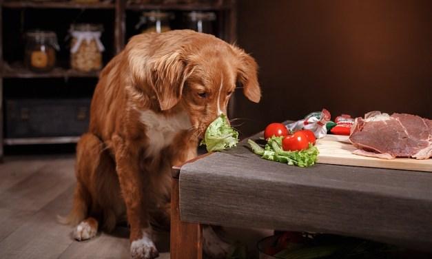 Homemade Dog Food & Treats
