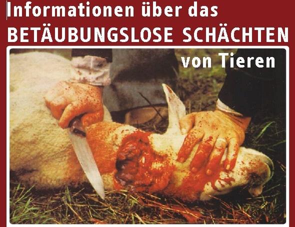 Quelle: Arbeitskreis für Umweltschutz und Tierschutz – Bundesarbeitsgruppe gegen betäubungsloses Schächte