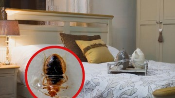 Bed Bug Treatment and Removal