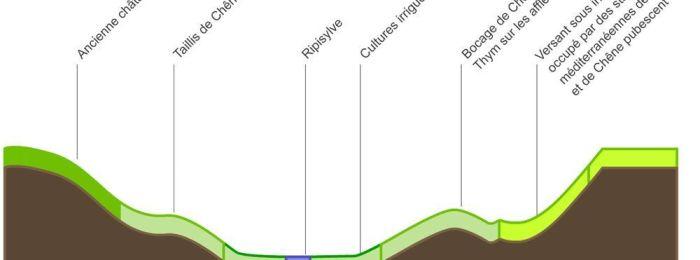 Climat et végétation du Rougier de Camarès