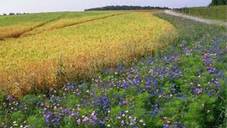 10 critères pour juger de la bonne santé écologique d'un paysage
