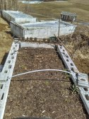 3 des 4 bacs perma. Deux sont couvert pour stimuler une levée (fau semis). Celui de devant a des restants de vivant ! Laitues, carottes, oignons...