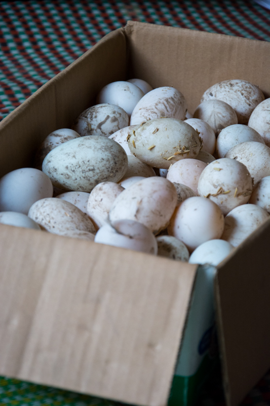 Mauvais stockage des oeufs -  Formation volailles avec Entrepreneurs du Monde - http://paysansdavenir.com/entrepreneurs-du-monde-region-de-dien-bien-commune-de-na-thau-groupement-de-productrices-de-canard/