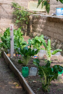 Agriculture urbaine à Sucre - une serre - http://paysansdavenir.com/agriculture-urbaine-pourquoi-comment-lexemple-de-la-bolivie/