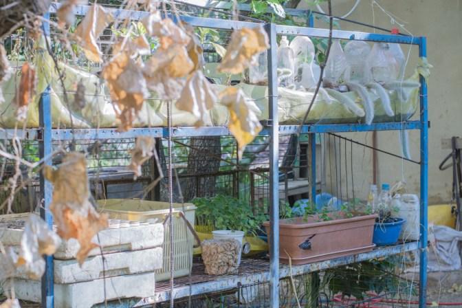 Agroforesterie à Cochabamba - la pépinière de l'exploitation