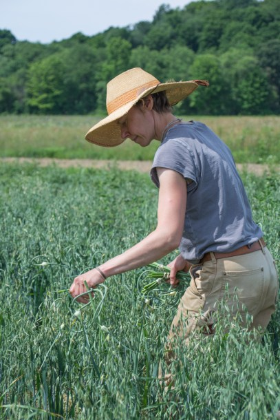 Little Seed Gardens, maraîchage et vente de paniers de légumes : Gretchen récolte les fleurs d'ail !