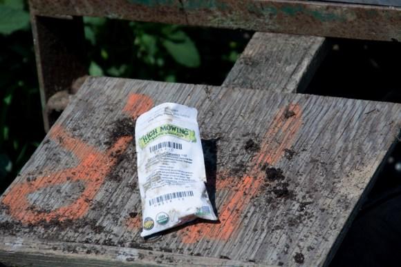 Little Seed Gardens, maraîchage et vente de paniers de légumes : graines de concombre