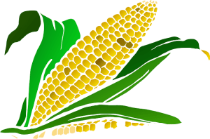 Corn on a Ketogenic Diet