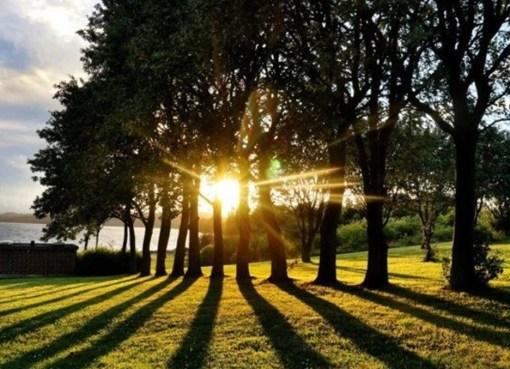 """دراسة: الأماكن المشمسة شهدت عدد وفيات أقل بحوالي الثلث بسبب """"كورونا"""""""