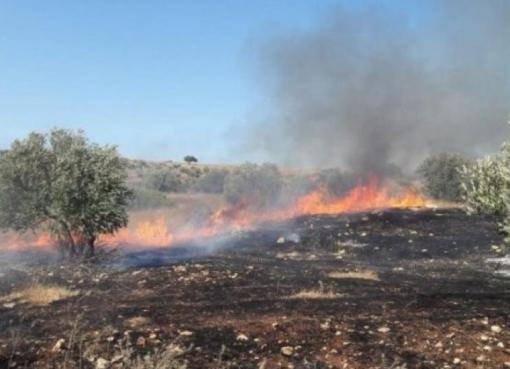 مستوطنون يحرقون عشرات الأشجار جنوب بيت لحم