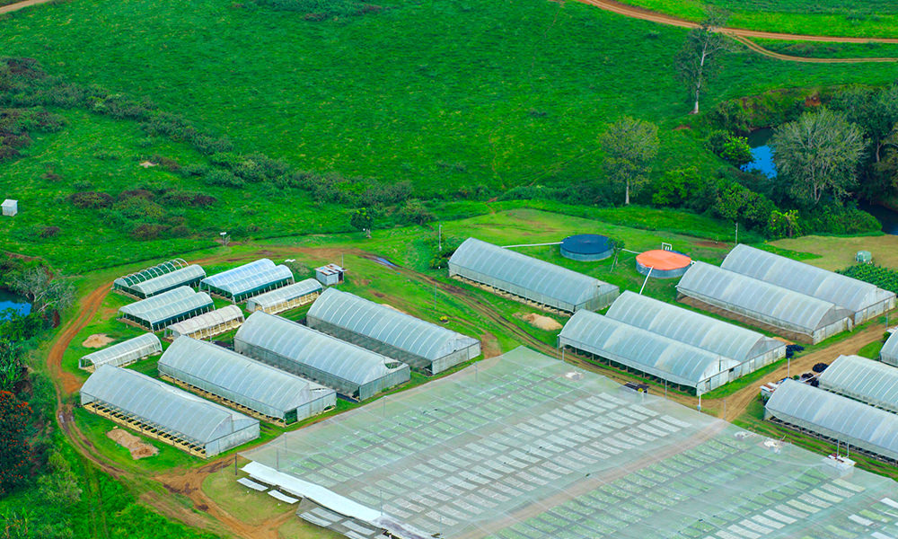PBF diversifies into Agro Business
