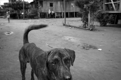 Jiguamiando perro
