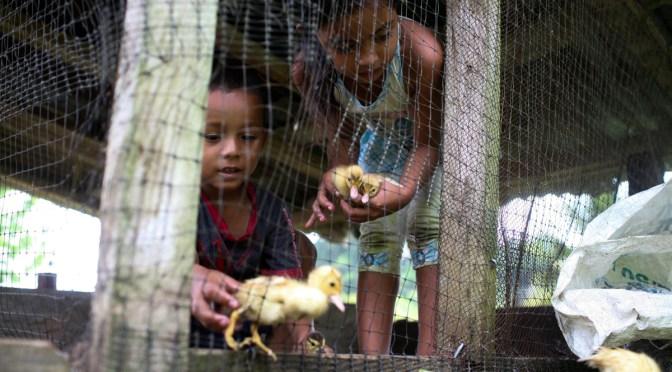 Lo económico y lo político – luchas complementarias desde la Comunidad de Paz de San José de Apartadó