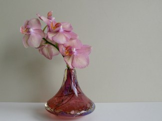 Pink Glass and Orchid -August 31, 2015