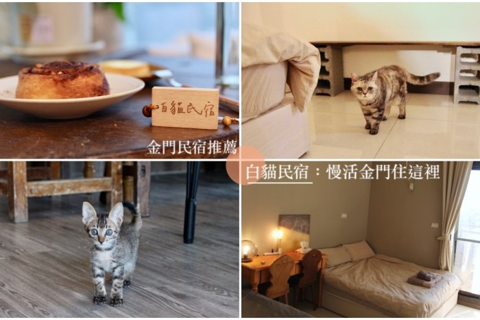 金門民宿推薦【白貓民宿:慢活金門住這裡】房間開箱|寵物友善|貓奴天堂|白貓甜點