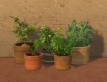 gardenplants_potted