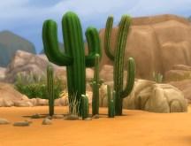 mts_plasticbox-1488949-pbox_liberated-plants-desert_05
