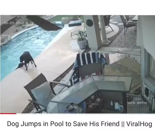 Fairy Xmas On Twitter Dog Sees His Friend Struggling In Poll Dog Jumps Into Pool To Save Friend Dog Then Checks To See If Friend Is Ok Dog Then Goes To