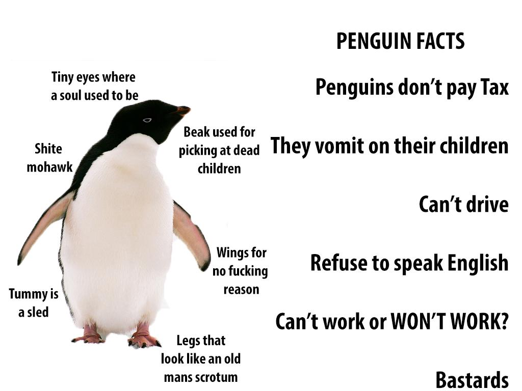 It S Easy To Think Penguins Are Cute But What Are The