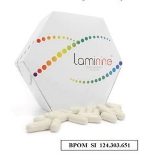 apa itu laminine