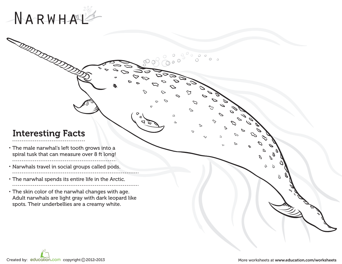 Education On Twitter This Narwhal Coloring Page Is Too Cute Add Some Color To One Of Our