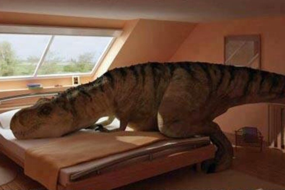 Upset Imagine Just Re Rex When T You