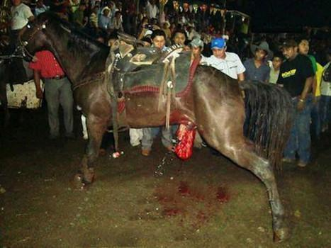 Today tweetstorm for mexican horses eviscerated for fun! # ...