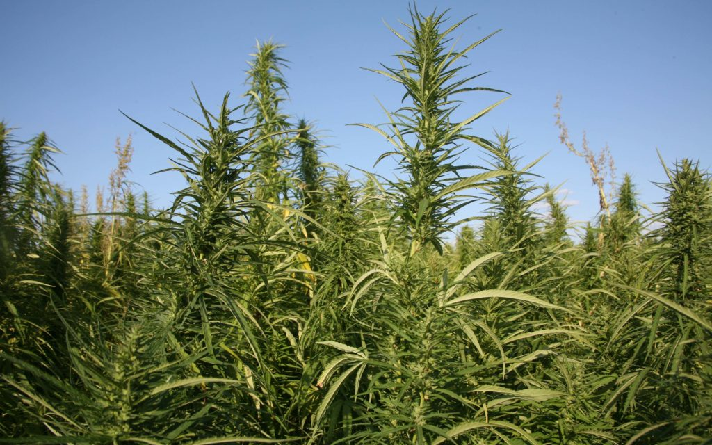 Check out the top 5 world hemp producers. Of course, the US isn't one of them..