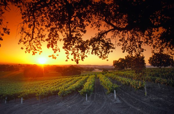 Using #IoT solutions 2 understand the needs of grapevines    #FutureMaker #wine #agriculture