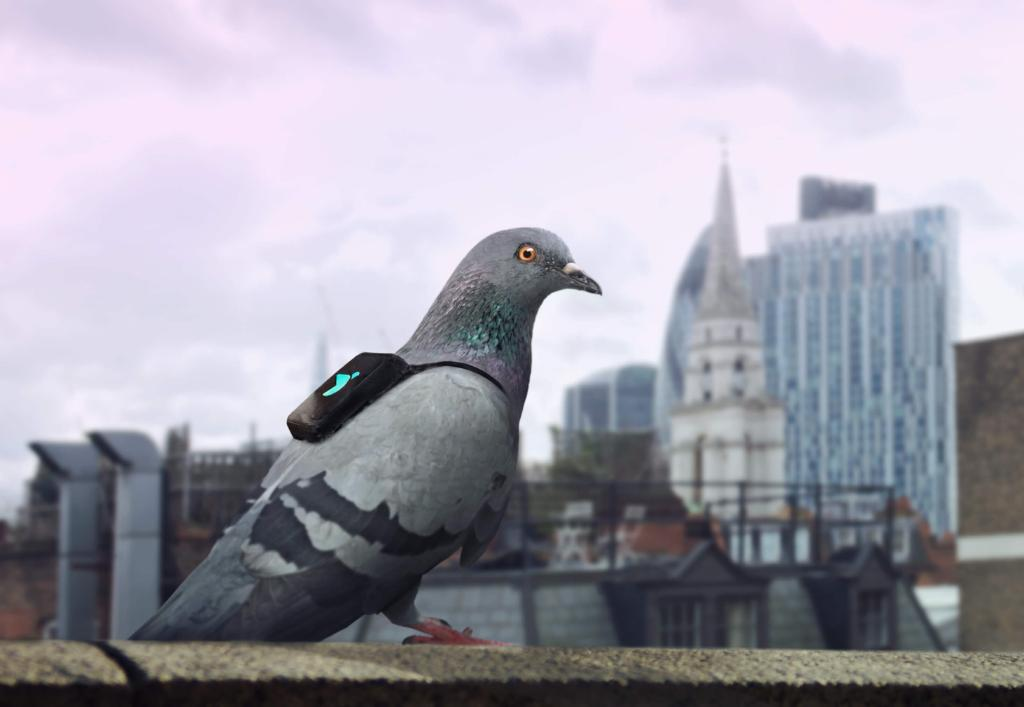 #IoT has taken flight in a big way. Learn how IoT-enabled pigeons fight pollution in London: