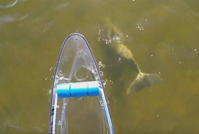 A canoeing session at Weeki Wachee River turned into a 🐬 encounter