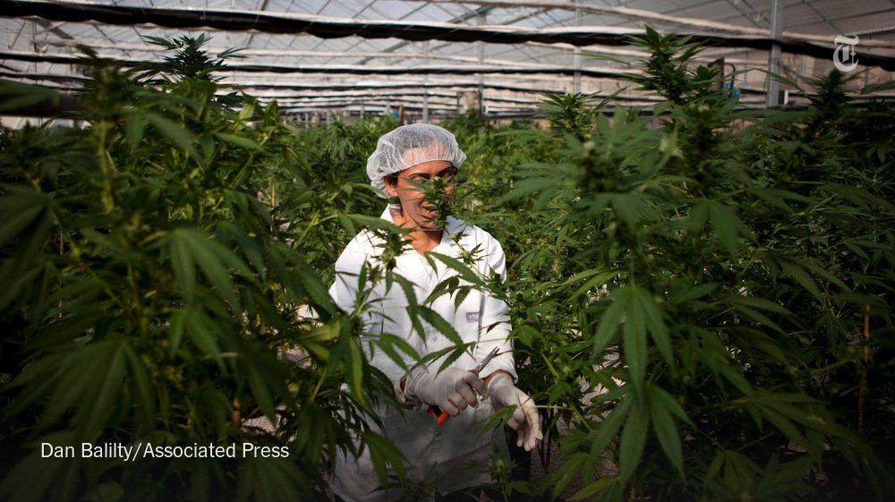 Israel's medical marijuana sector welcomed the proposed loosening in the country's pot laws.