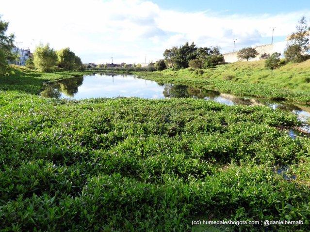 Espejo de Agua del humedal La Vaca Norte