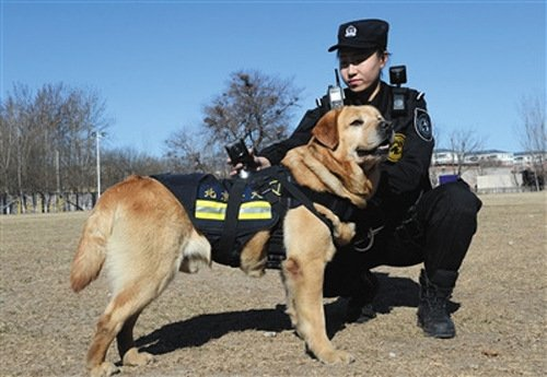 Chinese Police Dogs Are Now Using VR Cameras To Protect And Serve via @Hero_Kvatch #VR