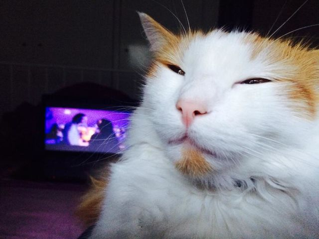 Meowijuana! Check Out 15 Cats That Are Higher Than You.  #Caturday