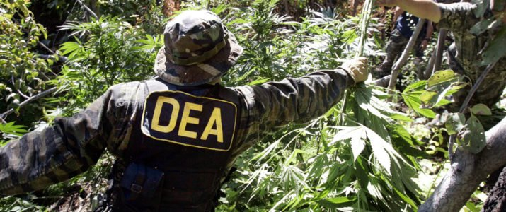 Why Is the DRUG Enforcement Agency Messing with the American Hemp Market? Hemp Isn't a Drug!