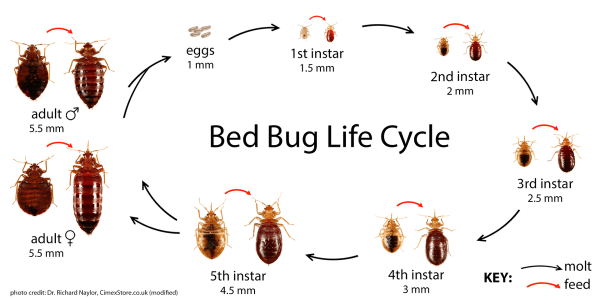 Bed Bugs https://www.reddit.com/r/Bedbugs/comments/2y4ll3/bedbug_id_and_common_misidentifications/