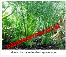 Manfaat dan khasiat Adas (Foeniculum vulgare Mill)