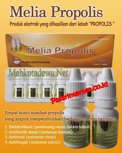 Manfaat , khasiat dan fungsi melia propolis