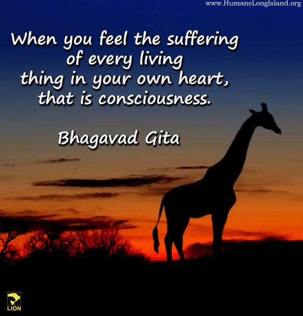 """LION on Twitter: """"When you feel the suffering of every ..."""