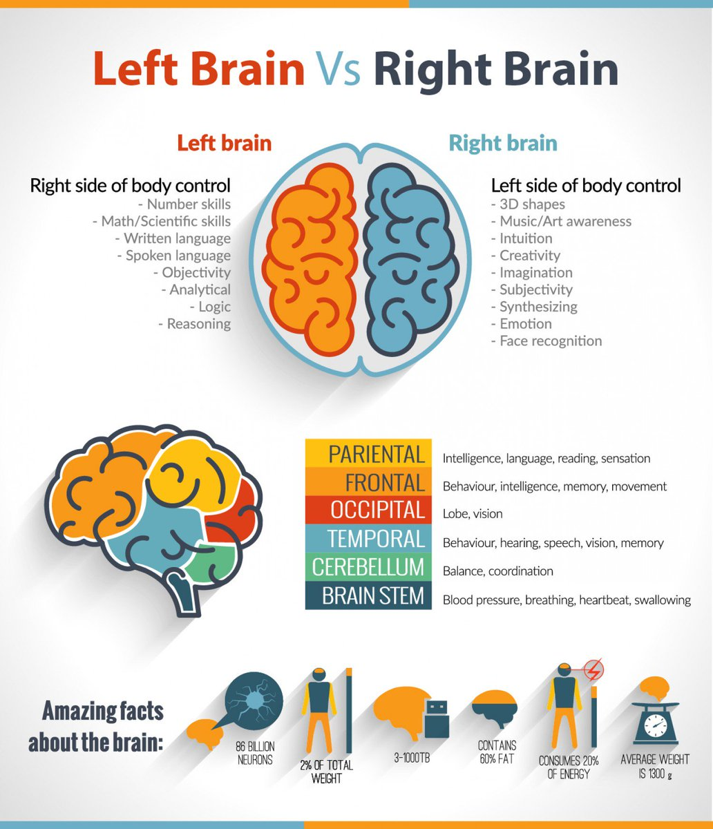 Aine Behan On Twitter Love Some Brain Fun Facts Check